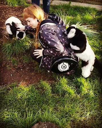 Hoo Farm Animal Kingdom Photo