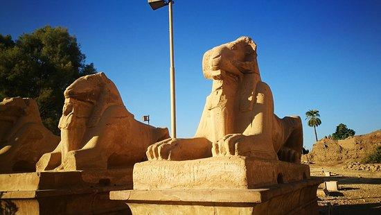 Moss Egypt Tours