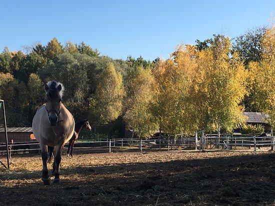 Padoki dla koni.
