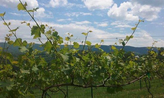 Giles Mountain Vineyard and Winery