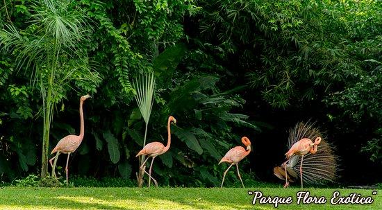 San Felipe ภาพถ่าย