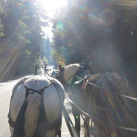 스탠리 파크 Horse-Drawn Tours 사진