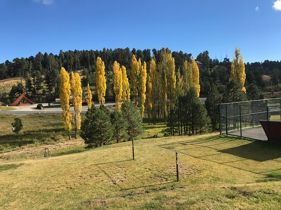 High Country Lodge : Fall trees