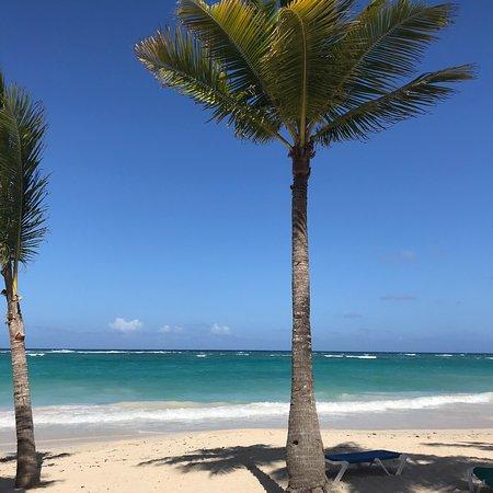 Muchos consultan por las algas en la playa, así está ahora! Todos los días en la mañana pasa un