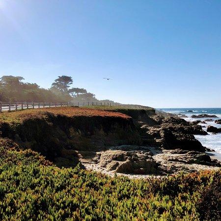 Plage de galets, Californie : Fanshell beach