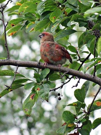 Palos Heights, IL: bird