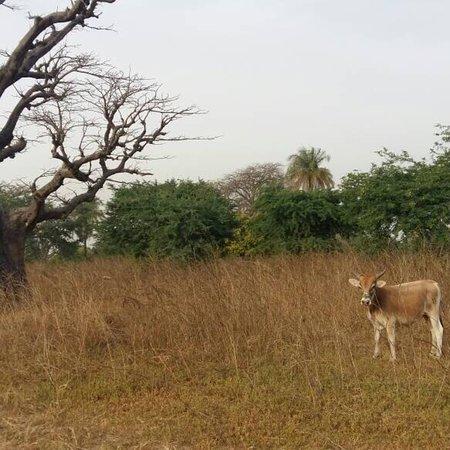 Palmarin, Σενεγάλη: Séjour senegal2018