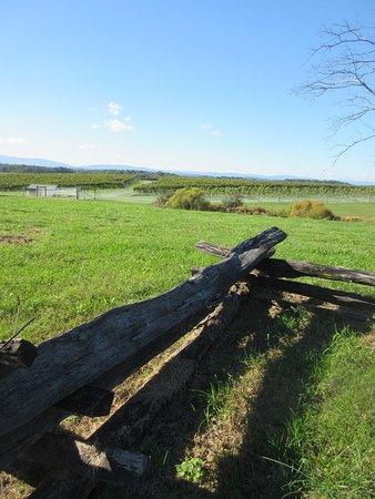 Fishersville, VA: Vineyards in the distance