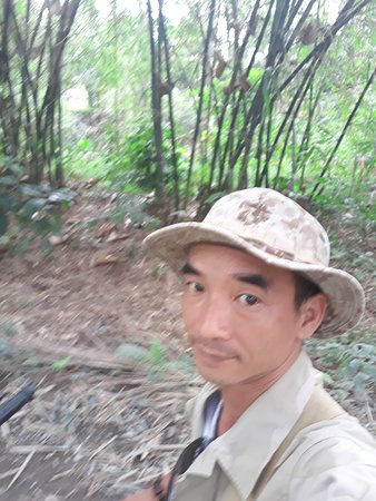 Провинция Бенче, Вьетнам: bamboo on the way