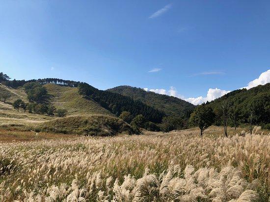 Toniomine Plateau