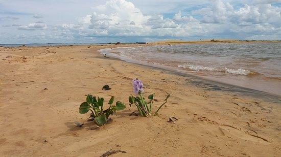 San Cosme y Damian, Paraguai: Flor brotando no meio da areia