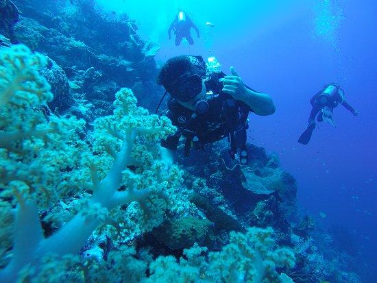menjangan island dive site