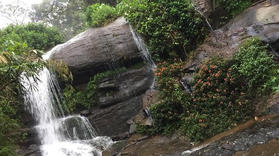 Bamboo Dale: a creek in the property
