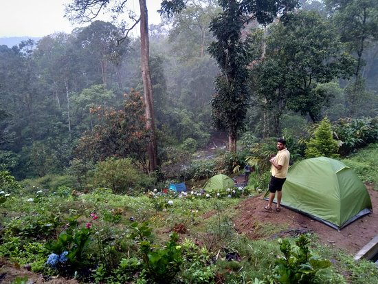 Bamboo Dale: tents