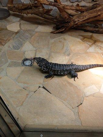 Alligator Bay: IMAG2446_large.jpg