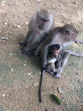 Excursions Thailand : Temple des singes