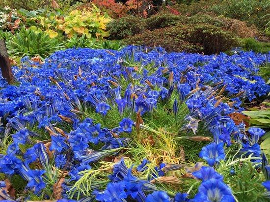 Royal Botanic Garden Edinburgh: Autumn flowers in the RGBE