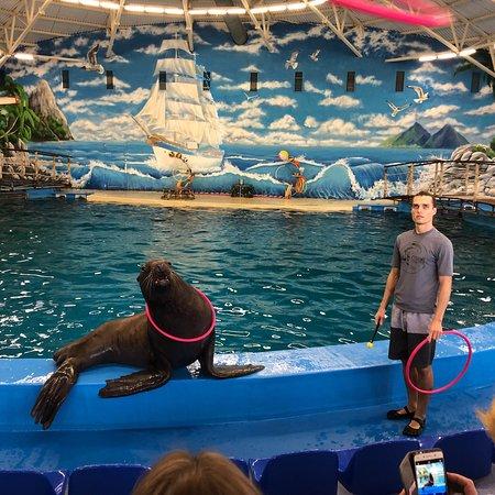 Dolphinarium Atlantida