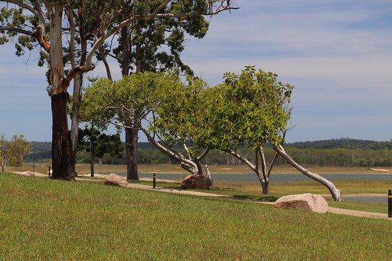Tinaroo, Australia: Interesting trees