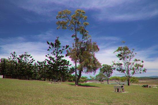 Tinaroo, Australia: Nice trees
