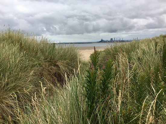 The Snooks and dunes, Teeside nature reserve, I walked here daily from the guesthouse with my do