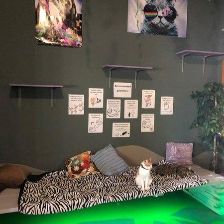 Γκρίνβιλ, Νότια Καρολίνα: Organic Cat Cafe