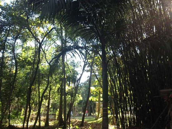 Manoel Cartucho Forest