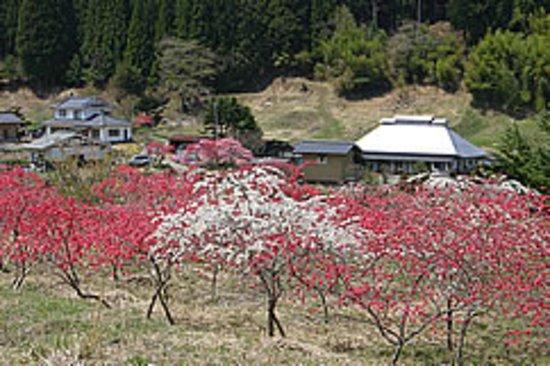 Yori no Ichiri Hanamomo