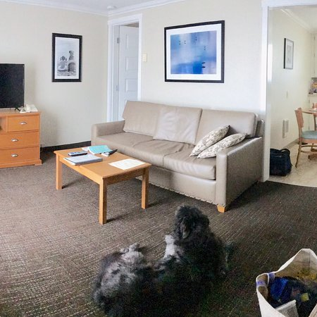 Dog friendly Lodging on Bay walking distance ocean