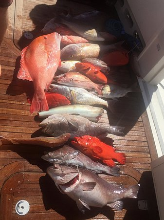 Exmouth, Austrália: The fish we caught on our charter tour.