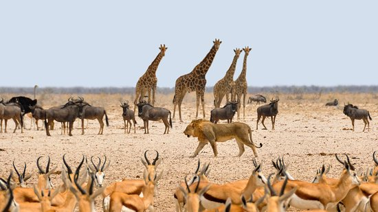 Nali Safaris