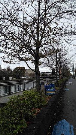 Edogawa, Japan: 並んでいる