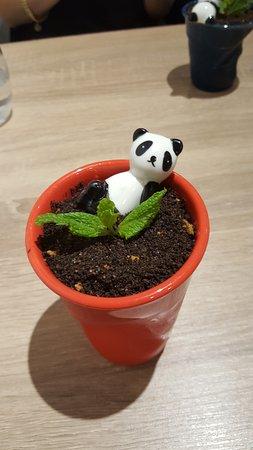 Panda & Co: une glace originale au look d'une plante verte
