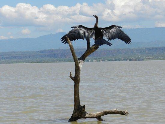 Kembu Cottages: Lake Baringo