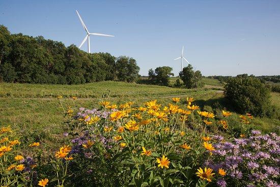 Morris, Minnesota: Plantings for native pollinators along the bike trail.