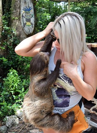 sloth encounter with baby
