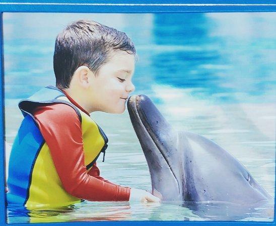 Dolphin Bay: Noah and Aladin