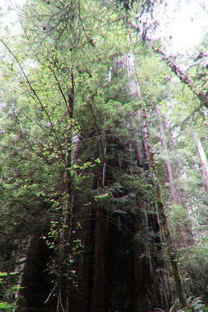 Hiking to the Redwoods