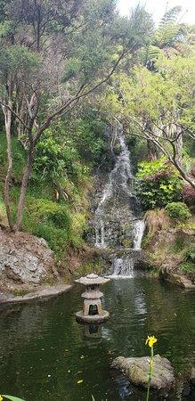 Wellington Botanic Garden: 20181024_151935_large.jpg