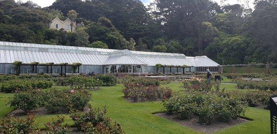 Wellington Botanic Garden: 20181024_151902_large.jpg