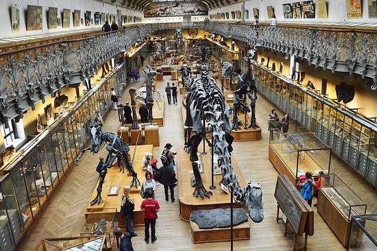 Galeries de Paleontologie et d'Anatomie comparee