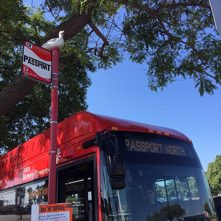 Long Beach Transit All You Need To Know Before You Go
