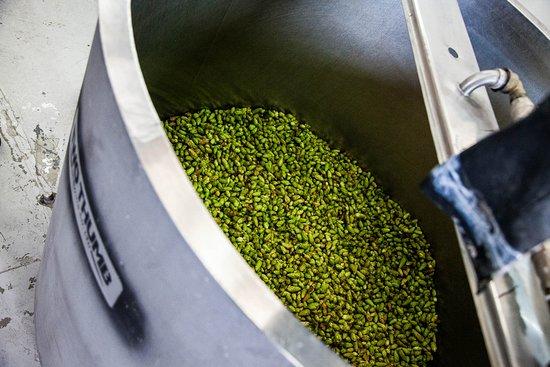 Fresh Hop Brew!