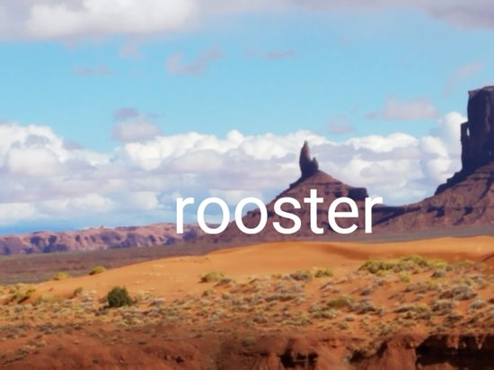 rooster Picture of Goulding's Monument Valley TripAdvisor