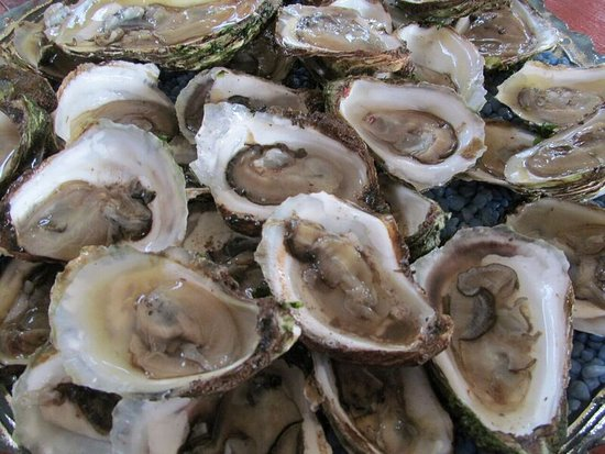 New London, Canada: Fresh oysters for our feast