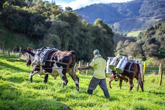 Colombia Moto Adventures: Colombian Cowboys