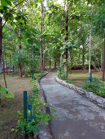 Ratapani Jungle Lodge