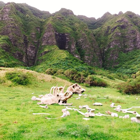Ảnh về Kualoa Ranch - Hollywood Movie Site & Ranch Tour