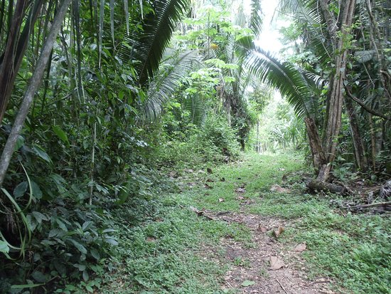 Unitedville, Belize: 100 acres with jungle trails to explore.  Birding Wildlife Nature!