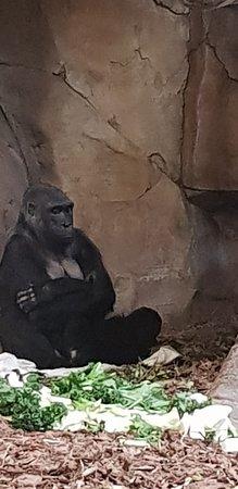 Henry Doorly Zoo: 20181020_113450_large.jpg
